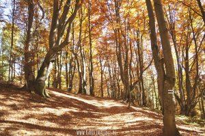 Autumn SONGS dla przedszkolaków