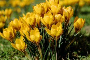 Wiosenne PIOSENKI dla przedszkolaków
