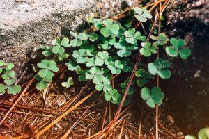 St. Patrick's Day SONGS for kids – najlepsze Patrykowe piosenki