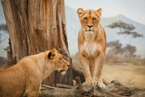 Wild animals SONGS dla dzieci