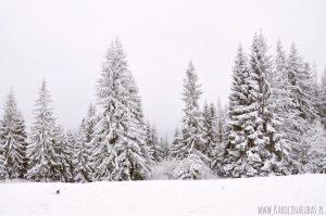 Winter SONGS dla dzieci